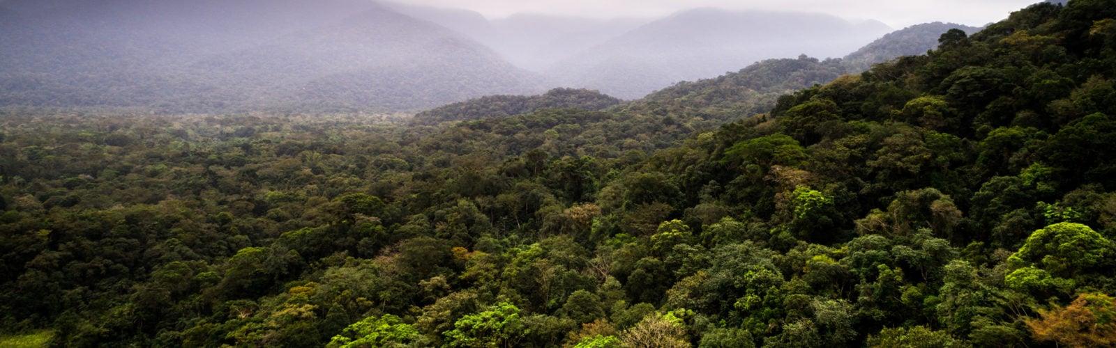 colombia-amazon-jungle