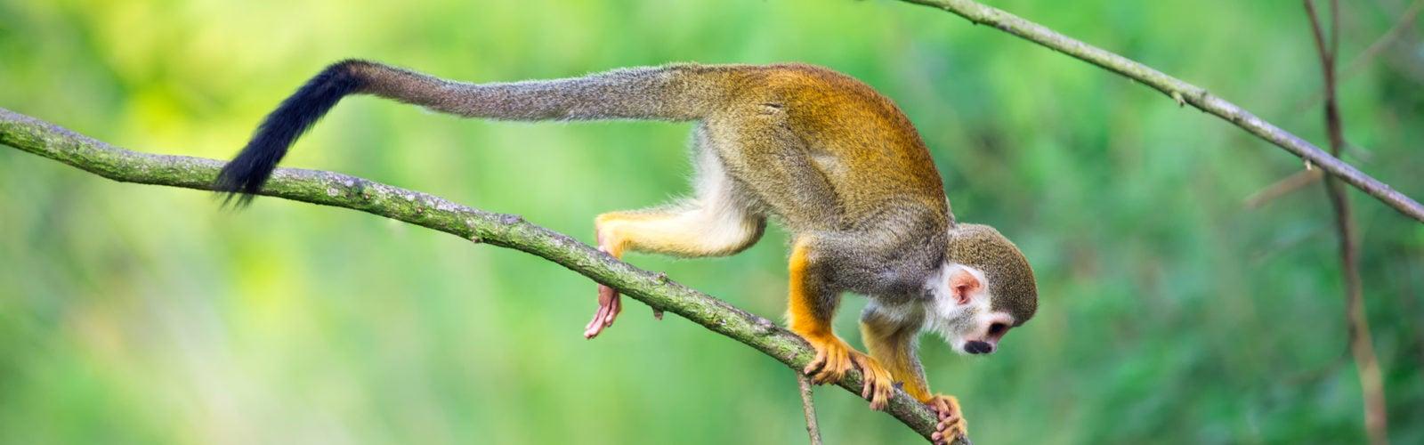 colombia-amazon-monkey