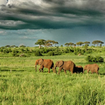 Olivers-Camp-Elephants-under-dramatic-clouds