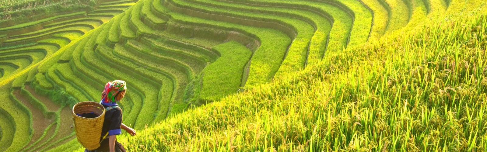 vietnam-rice-terraces