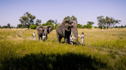 botswana-stanleys-camp-elephant-walking-safari