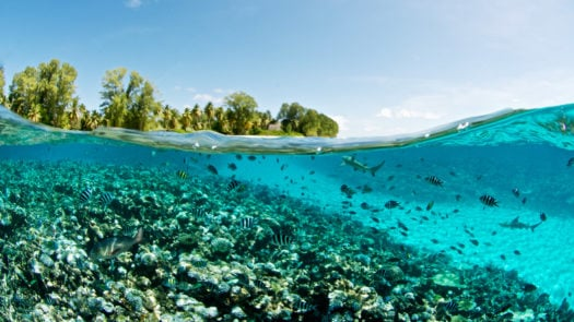 seychelles-coral-reef-view