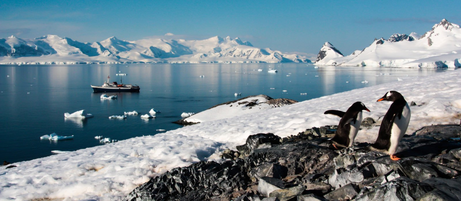 antarctica-view-penguins