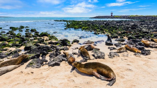 fur-seals-punta-carola-beach-galapagos-islands