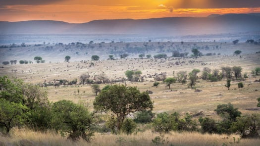 tanzania-expeditions-mwiba-reserve