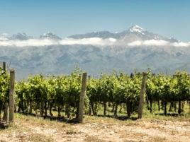 vineyard-mendoza-argentina