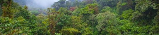 cloud-forest-costa-rica