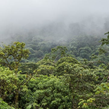 cloud-forest-costa-rica