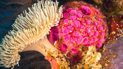 tufi-underwater-coral-papua-new-guinea