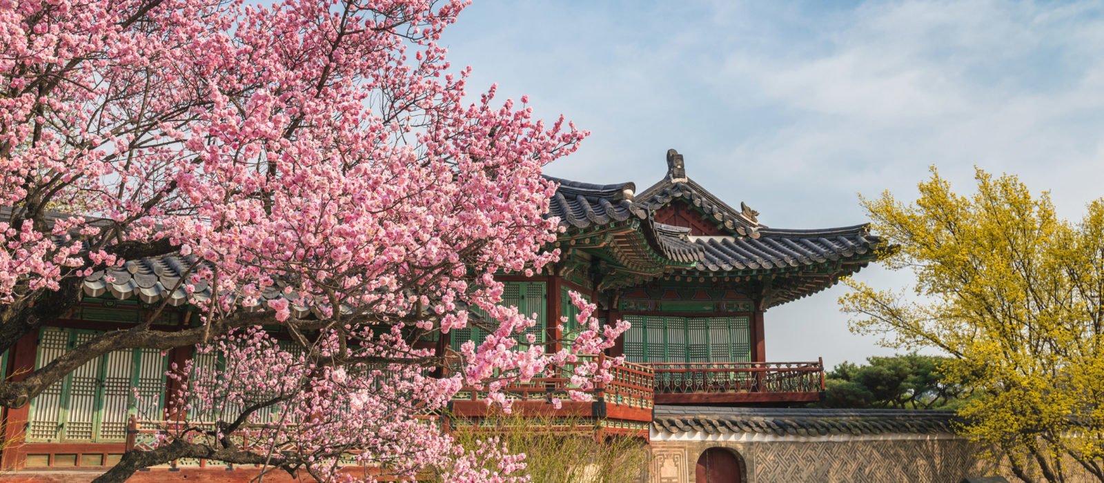 spring-cherry-blossom-seoul-south-korea