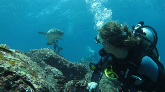Diving with sharks, The Galapagos Islands