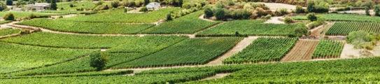vineyard-burgundy-france