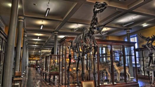 dublin-natural-history-museum