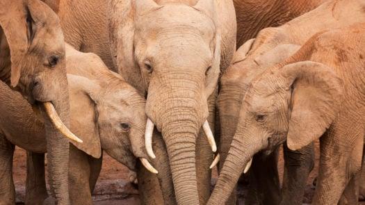 herd-elephants-waterhole-addo-elephant-national-park