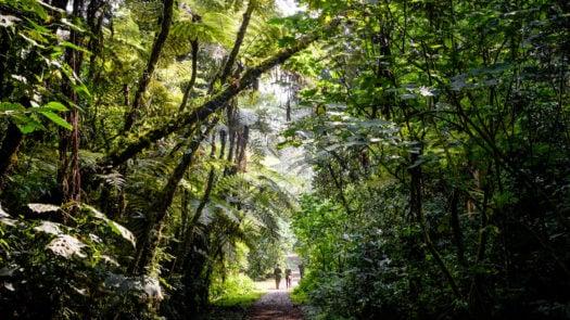 forest-walk-bwindi