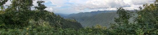 bwindi-impenetrable-forest