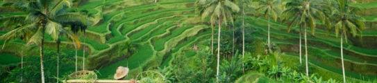 farmer-rice-terraces-bali-indonesia