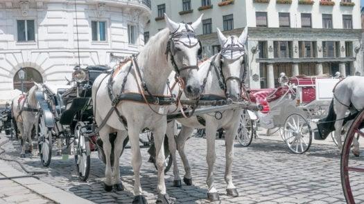 fiacre-horsedrawn-carriage-vienna-austria