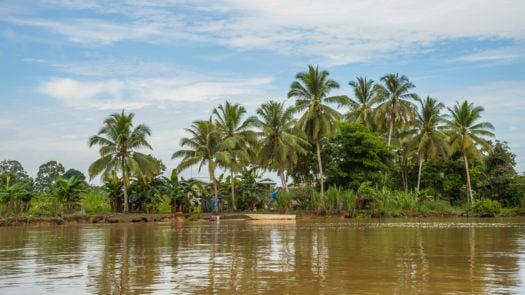 tropical-rainforest-kinabatangan-river-borneo