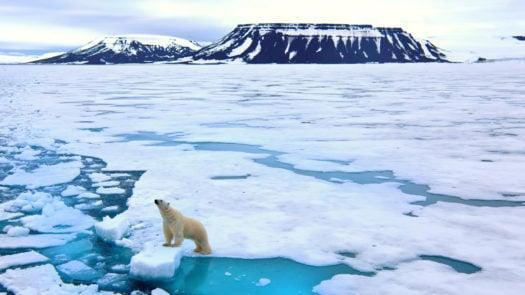 polar-bear-pack-ice