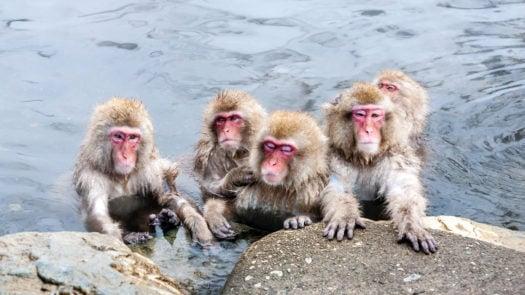 snow-monkeys-japan-hot-spring