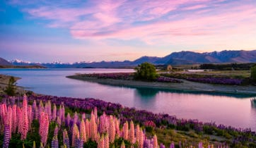 lake-tekapo-south-island-new-zealand