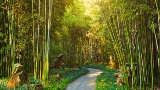 china-bamboo-forest