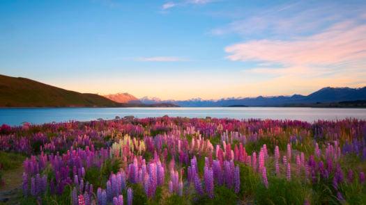 lake-tekapo-south-island-new-zealand