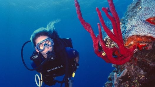 scuba diver Great Belize Reef
